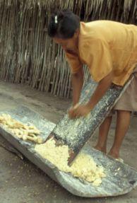 Le manioc est râpé...
