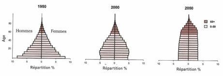 """Evolution de la pyramides des âge de la population mondiale. Source """"World Population Ageing""""."""