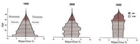 """Evolution de la pyramides des âge de la population en Chine. Source """"World Population Ageing""""."""
