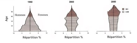 """Evolution de la pyramides des âge de la population  au Japon. Source """"World Population Ageing""""."""