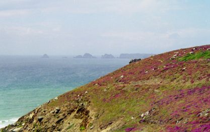 La rase végétation de la Pointe du raz en Bretagne résulte d'une adaptation à la zone ventée. Ces mêmes plantes à l'abri du vent auraient une tige plus haute.