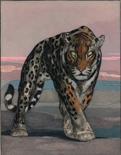 """Paul Jouve. Illustration du livre """"Une passion dans le désert"""" de Balzac"""