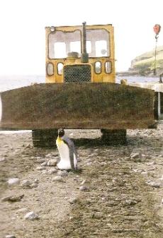 Dérangement dans les îles subantarctiques, manchot royal couvant son œuf