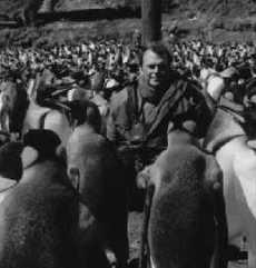 Michel Gauthier-Clerc sur l'île de la Possession dans l'Archipel des Iles Crozet (nov. 1996)