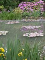 Vue du jardin japonais