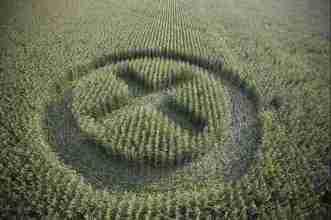 Le champ OGM de Claude Menara avait été immortalisé par le photographe Yann Arthus Bertrand, membre de l'Académie des beaux-arts