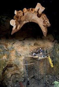 Mandibule de Sima del Elefante, 1 200 000 ans, découverte en 2007