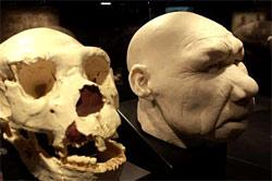 Reconstitution du visage d'un Homo-antecessor