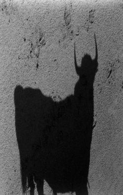 Lucien Clergue, L'ombre du Taureau, 1989