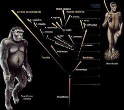 Evolution de l'Homme selon Yves Coppens
