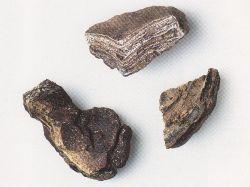 Trois morceaux d'ambre gris. Collection particulière © D.R