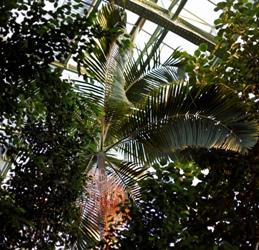 Serre des forêts tropicales humides. Vue du toit