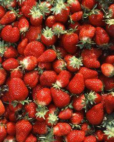 Comme les hirondelles, les fraises accompagnent le retour du printemps