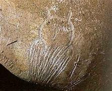 Le hibou de la grotte Chauvet a été gravé sur la paroi. Il a la particularité de regarder le spectateur tout en étant de dos
