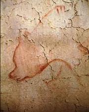 """""""Cette grotte sentait l'ours, au sens propre comme au figuré"""" explique Jean Clottes. Il est omniprésent dans l'art rupestre et dans la vie de ses hommes"""