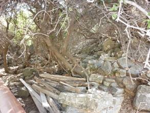 Etat avant le dégagement des pierriers et de la végétation