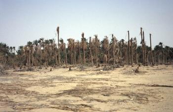 Demain, à l'issue de la salinisation des sols?