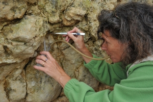 Christine Rollard collectant une araignée avec un aspirateur à bouche