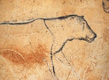 Grotte Chauvet, lionne
