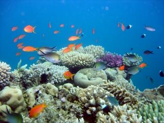 Fond marin de Mayotte, deuxième plus grand lagon fermé au monde.